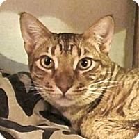 Adopt A Pet :: Lucien - Davis, CA