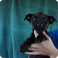 Adopt A Pet :: Tilly - Oviedo, FL
