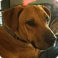 Adopt A Pet :: Star - Tampa, FL