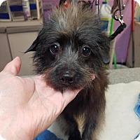 Adopt A Pet :: Rocco - Spartanburg, SC
