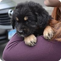 Adopt A Pet :: *Sweet Chili - Westport, CT
