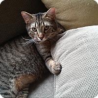 Adopt A Pet :: Morris - St. Charles, IL