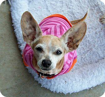 Chihuahua Mix Dog for adoption in Greensboro, Georgia - Polly