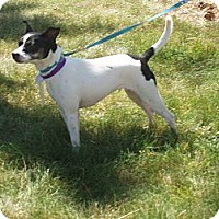 Adopt A Pet :: Jasmine - Wisconsin Dells, WI