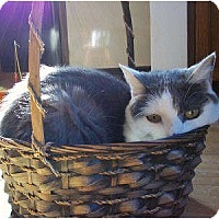 Adopt A Pet :: Margie - St. Louis, MO