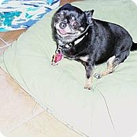 Adopt A Pet :: Tinky - Berlin, WI