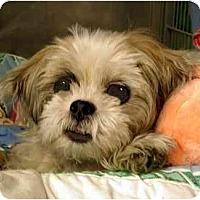 Adopt A Pet :: Jett - New York, NY
