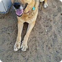 Adopt A Pet :: Riley - Victorville, CA