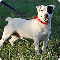 Adopt A Pet :: Hubert in Denton - Dallas/Ft. Worth, TX