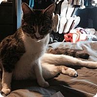 Adopt A Pet :: Yoda(2) - Plainville, MA