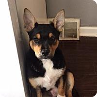 Adopt A Pet :: Amelia - South Euclid, OH
