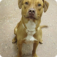 Adopt A Pet :: Tazer *Petsmart GB* - Appleton, WI