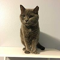 Adopt A Pet :: Emma - Winchester, CA