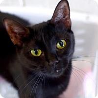 Adopt A Pet :: Peony - Greenwood, SC