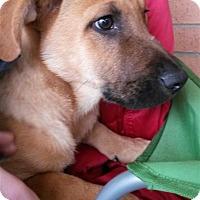 Adopt A Pet :: Liam - Fairfax Station, VA