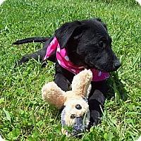 Adopt A Pet :: NUTMEG/Summer Special Pricing - Glastonbury, CT
