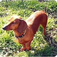 Adopt A Pet :: Horatio - San Jose, CA
