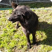 Adopt A Pet :: Dewey - Washington, NC