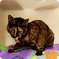 Adopt A Pet :: Priya - Salisbury, MA