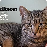 Adopt A Pet :: Addison - Carencro, LA