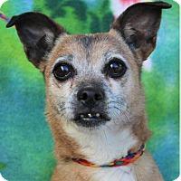 Adopt A Pet :: ZORITA - Red Bluff, CA