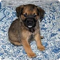 Adopt A Pet :: Brian - Minneola, FL