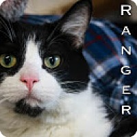 Adopt A Pet :: Ranger Kitty $50 - Union Lake, MI