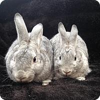 Adopt A Pet :: Keating & Landon - Watauga, TX