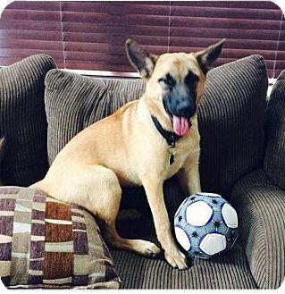 German Shepherd Dog/Anatolian Shepherd Mix Dog for adoption in Baltimore, Maryland - Kona