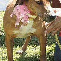 Adopt A Pet :: Victoria (Vicky) - Grayson, LA