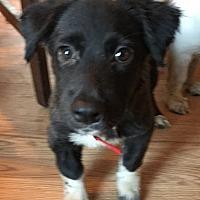 Adopt A Pet :: Magnolia - East Windsor, NJ