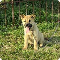 Adopt A Pet :: NISHKA - Bedminster, NJ