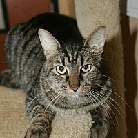 Adopt A Pet :: Simone - Capshaw, AL