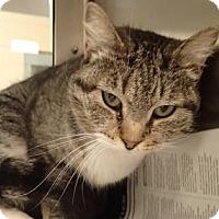 Adopt A Pet :: Gabby - Wichita, KS