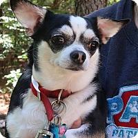 Adopt A Pet :: Jewel - Saratoga, NY