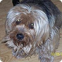 Adopt A Pet :: Lady - Andrews, TX