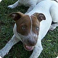 Adopt A Pet :: Rosie - Bakersfield, CA