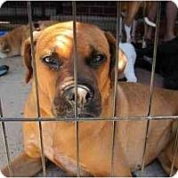 Adopt A Pet :: Rex - Alexandria, VA