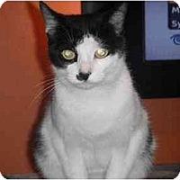 Adopt A Pet :: Wubbies - West Park, NY