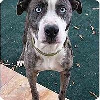 Adopt A Pet :: Keira - Mocksville, NC