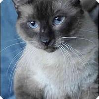 Adopt A Pet :: Jazz - Columbus, OH