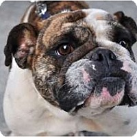 Adopt A Pet :: Mariposa - Winder, GA