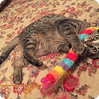 Adopt A Pet :: Guster - St. Louis, MO