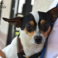 Adopt A Pet :: Noah in Conroe - Austin, TX