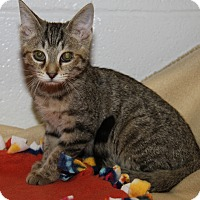 Adopt A Pet :: Betsy (Spayed) - Marietta, OH
