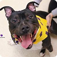 Adopt A Pet :: Astro - Grand Rapids, MI