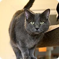 Adopt A Pet :: Nina - Gaithersburg, MD