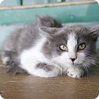 Adopt A Pet :: Kashi - San Antonio, TX