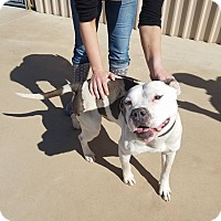 Adopt A Pet :: Joey - Wichita Falls, TX