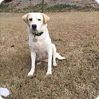 Adopt A Pet :: South America - Acworth, GA